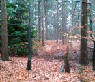 Recording forest rain in Hampshire, England