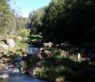 Creek at Kondalilla