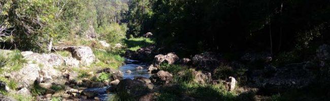 Creek at Kondalilla
