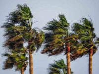Wind in palm trees
