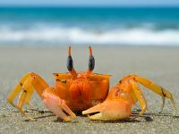 Free crab sound effects