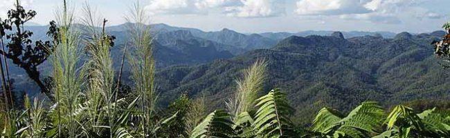Thai jungle