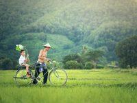 Thailand Wetlands